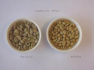 イルガ生豆